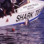 A3 Shark team & shark