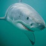 Shark 2 A4