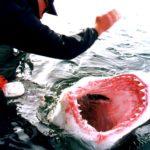 Shark Touch A4